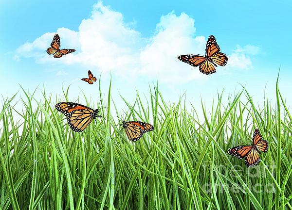 Butterflies In Tall Wet Grass Print by Sandra Cunningham
