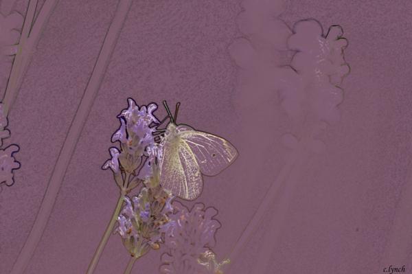 Butterfly 1 Print by Carol Lynch