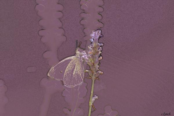 Butterfly 3 Print by Carol Lynch