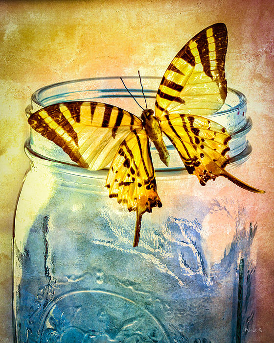 Butterfly Blue Glass Jar Print by Bob Orsillo