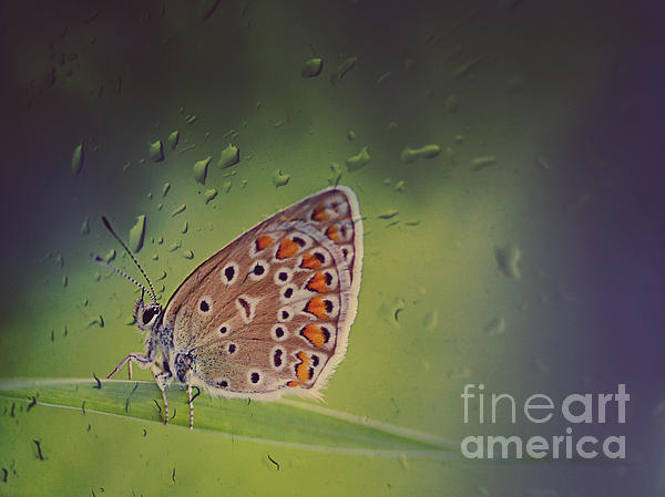 Butterfly Print by Diana Kraleva