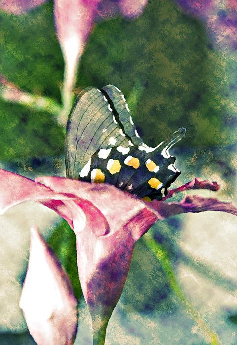 Butterfly In Flower Print by Susan Leggett