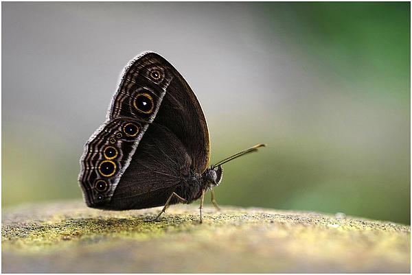 John Fotheringham - Butterfly