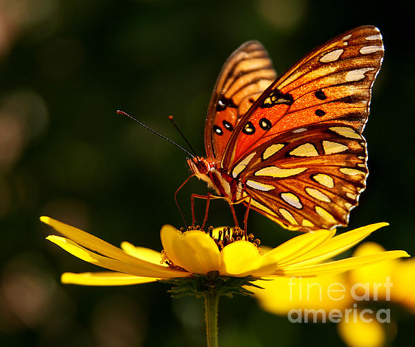 Butterfly On Flower Print by Joan McCool