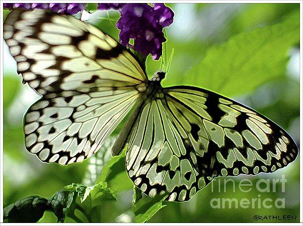Kathleen Struckle - Butterfly On Purple