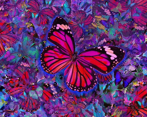 Butterfly Red Explosion Print by Alixandra Mullins