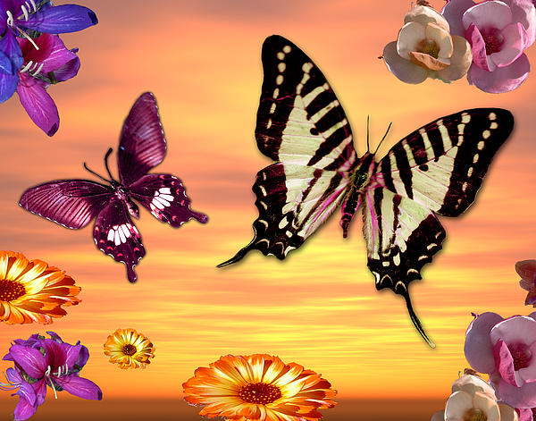 Butterfly Sunset Print by Alixandra Mullins