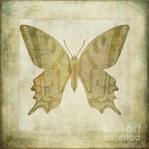 Butterfly Textures Print by John Edwards