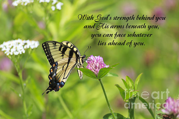 butterfly-with-religious-quote-jill-lang.jpg