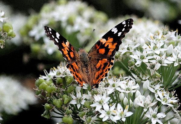 Suzanne Gaff - Butterfly World