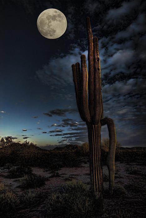 By The Light Of The Moon Print by Saija  Lehtonen