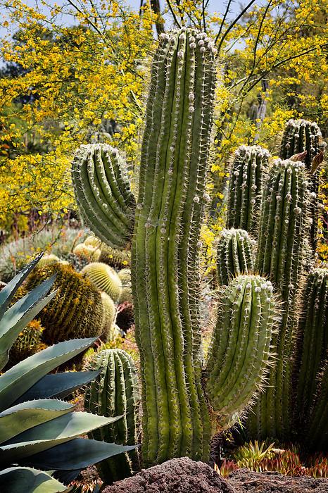 Cacti Habitat Print by Kelley King