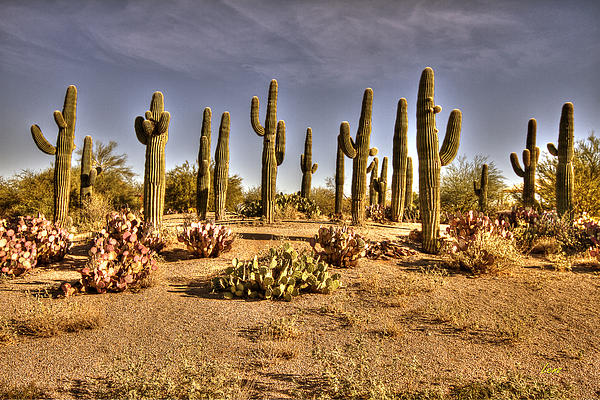 Cactus Patch Print by George Lenz
