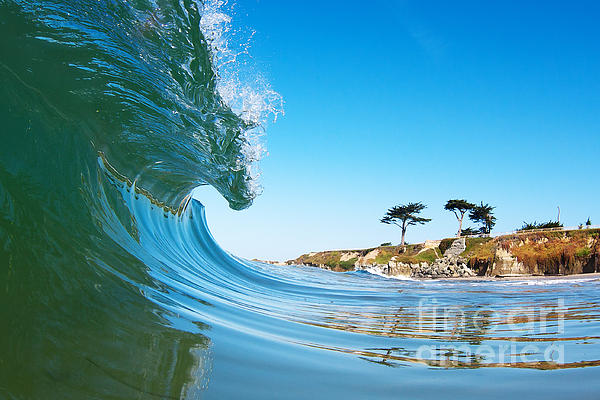 California Curl Print by Paul Topp