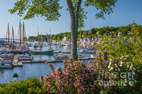 Camden Harbor Spring Print by Susan Cole Kelly