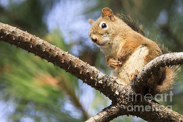 Nancy Harrison - Camping Squirrel