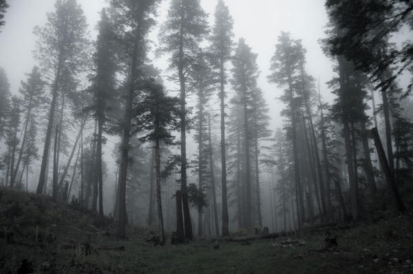 Pamela Bycraft - Campsite in the fog