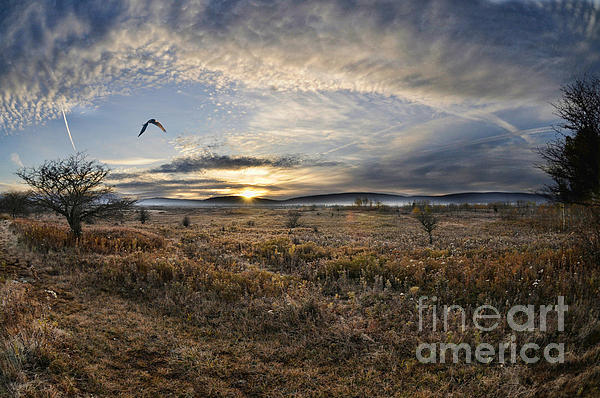 Canaan Valley In Morning Print by Dan Friend