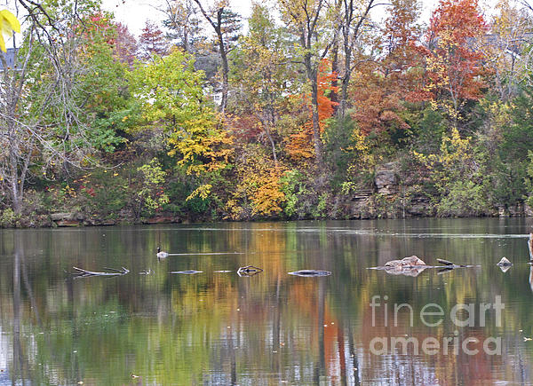 Minding My  Visions - Canadian Goose Swimming Through the Autumn Reflections on the Pond