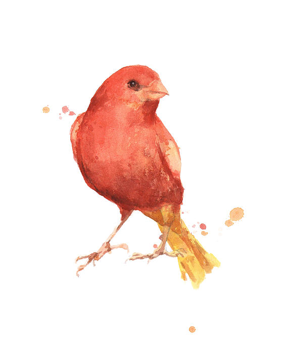 Canary Bird Print by Alison Fennell