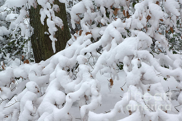 Candy Floss Snow Print by David Birchall