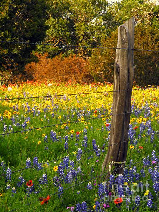 Joe Jake Pratt - Cant Fence Flowers