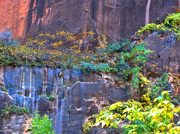 ... Wall From River Walk In Zion Canyon In Zion Np-ut Print by Ruth Hager