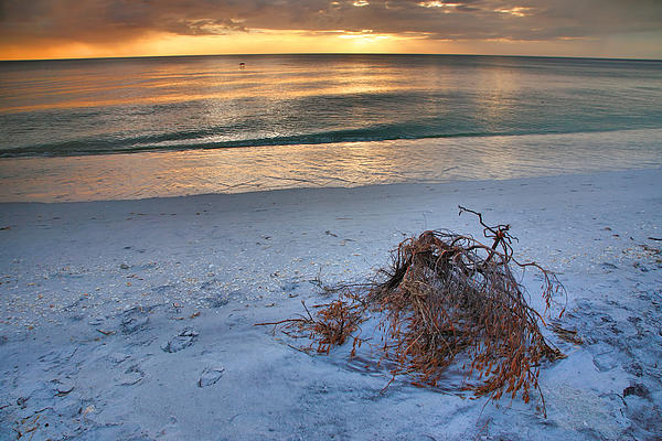 Captiva Sunset Iv Print by Steven Ainsworth