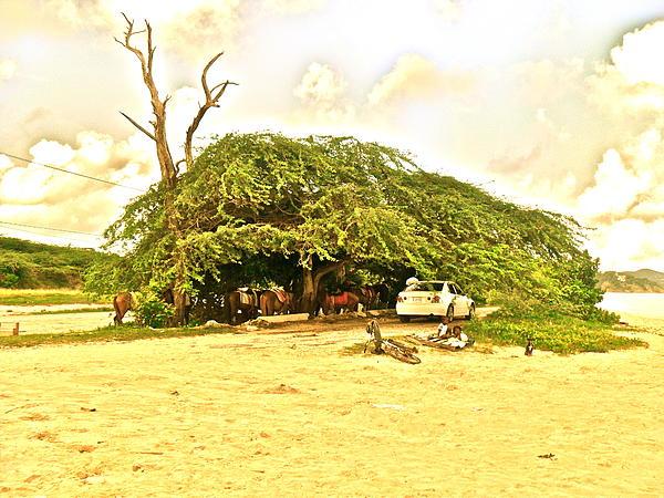 Caribbean Hut Print by Amanda Just