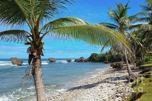 Caribbean Paradise Print by Karen English