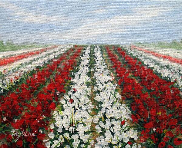 Mary Taglieri - Carlsbad Flower Fields I