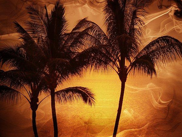 Athala Carole Bruckner - Carmel sunset