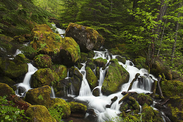 Cascades In The Woods Print by Andrew Soundarajan