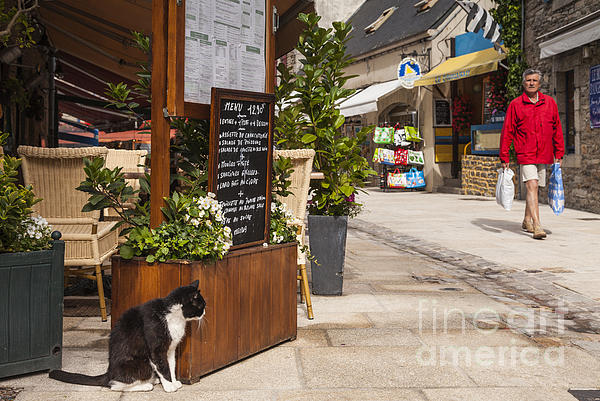 Cat And Restaurant Concarneau Brittany France Print by Colin and Linda McKie