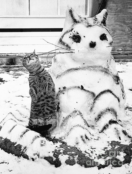Cat And Snowcat Print by Jack Rosen