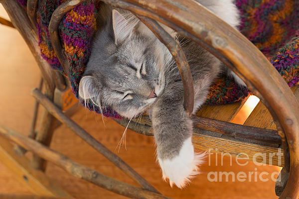 Cat Asleep In A Wooden Rocking Chair Print by Louise Heusinkveld