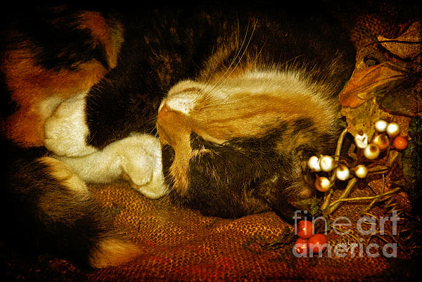 Cat Catnapping Print by Lois Bryan