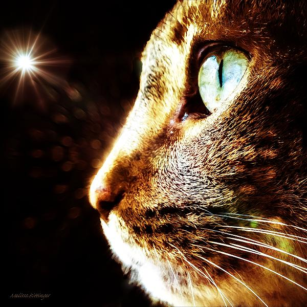 Melissa Bittinger - Cat Magic