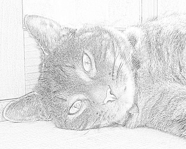 Cat's Eye Print by J D Owen