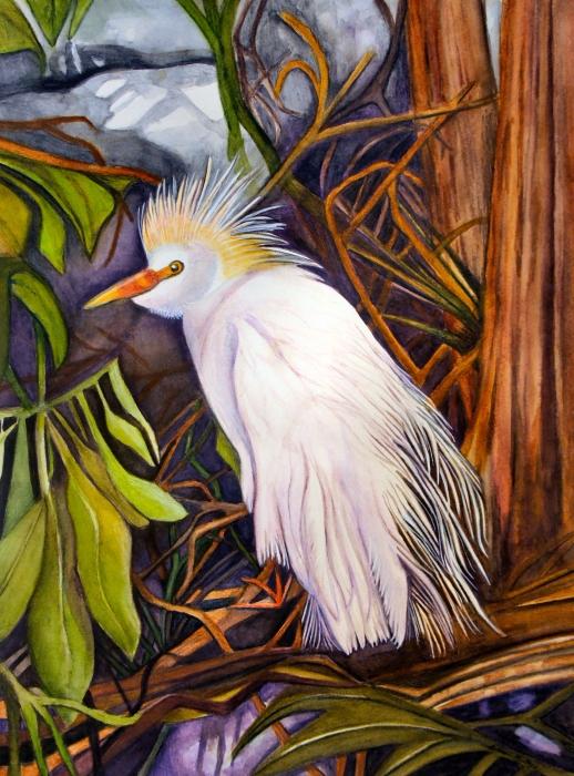 Cattle Egret Print by Elaine Hodges
