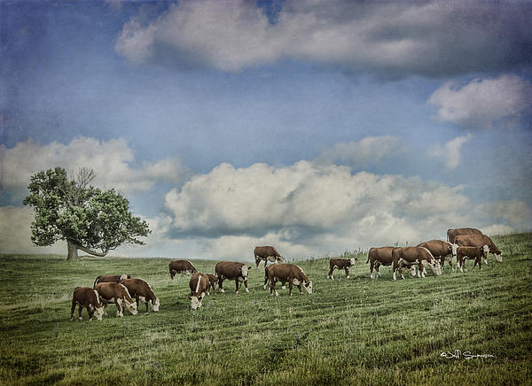 Cattle Grazing Print by Jeff Swanson