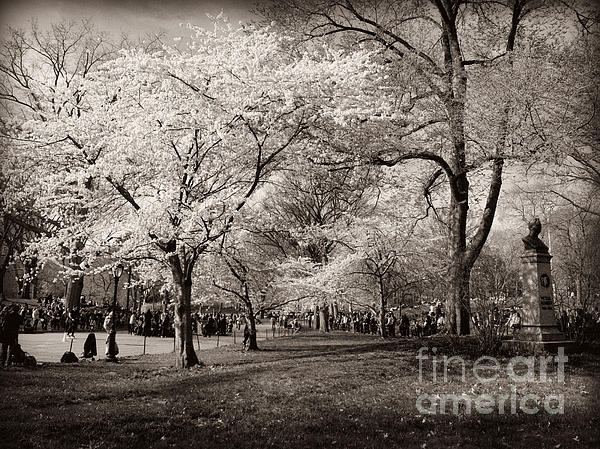 Miriam Danar - Central Park in Bloom - Antique Appeal