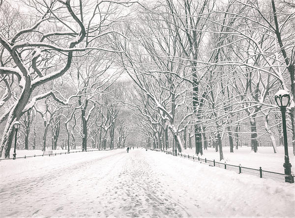 Central Park Winter - Poet's Walk In The Snow - New York City Print by Vivienne Gucwa