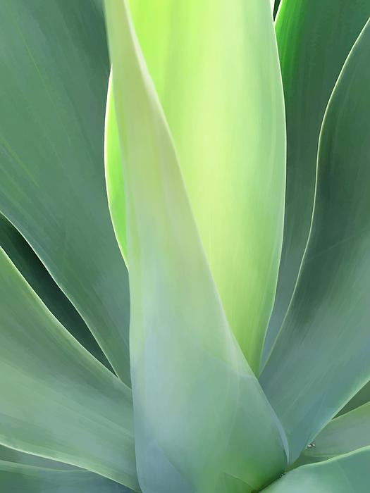 Dawn Eshelman - Century Plants 6-1