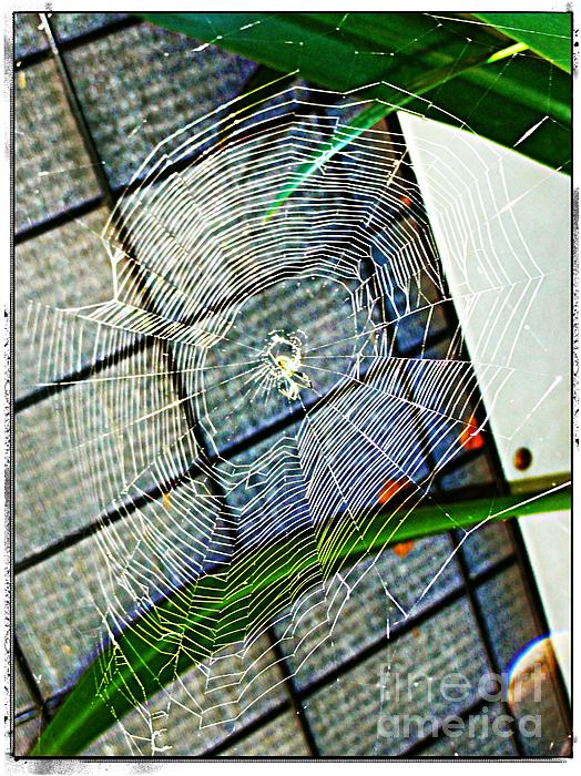 Charlotte's Web Print by Meagan Hoelzer