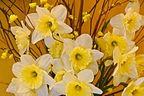 Cheerful Warmth Of Spring Print by Byron Varvarigos