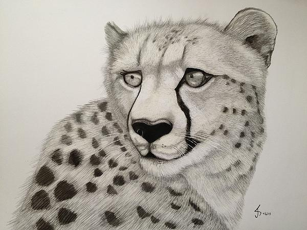 Cheetah Print by Jess Stanley