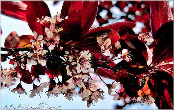 Cherry Blosoms 2 Print by Danielle  Parent