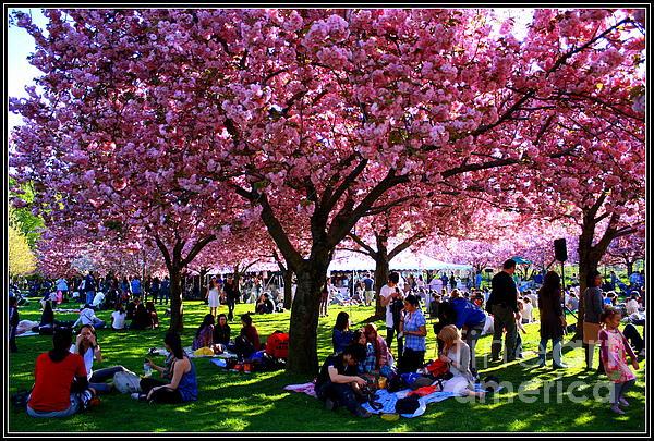 Cherry Blossom Festival Print by  Photographic Art and Design by Dora Sofia Caputo