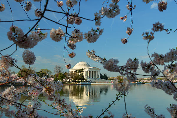 Cherry Blossoms 2013 - 039 Print by Metro DC Photography
